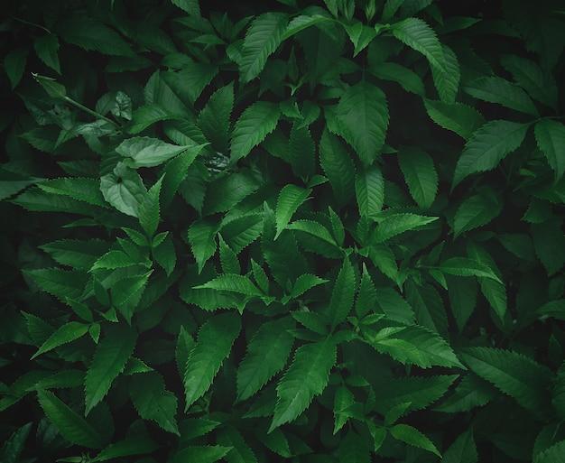 緑の葉の背景濃い緑の葉