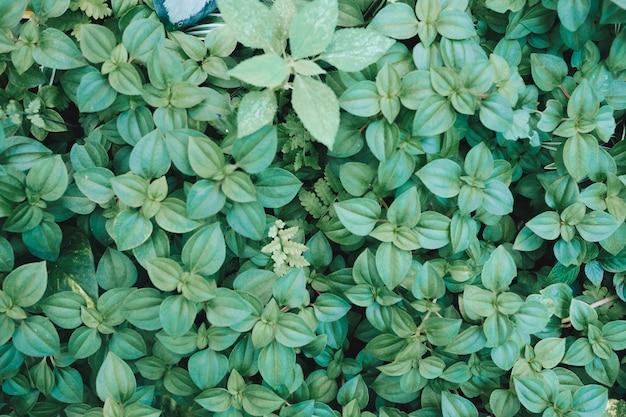 Green leaf background. green leaf. green trees background. green leaf texture.