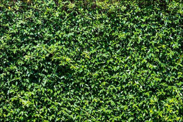 庭の緑の葉の背景。