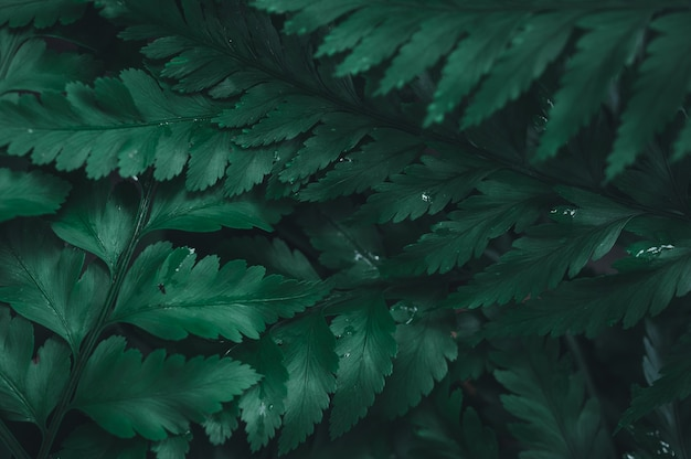 The green leaf background showing the love of nature and the environment Premium Photo