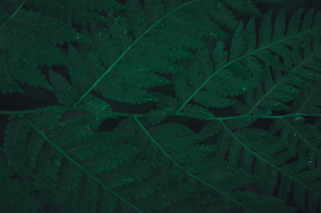 The green leaf background showing the love of nature and the environment