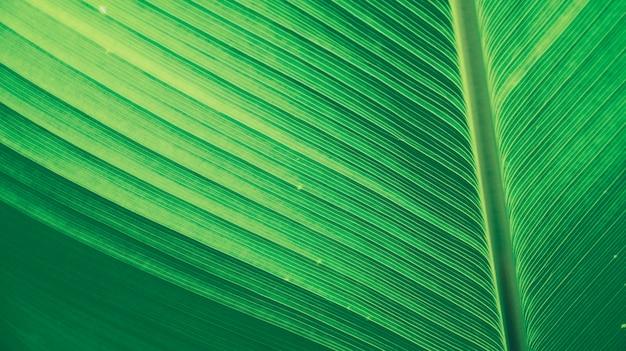 熱帯雨林のジャングルバナナの緑の葉の背景テクスチャエコロジーガーデンは、ヤシの木を残します。