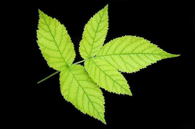 Green leaf on black background