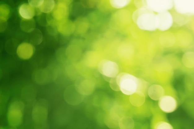 太陽の光を背景に緑の葉がぼやける