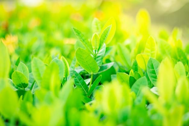 Green leaf on blurred greenery background, soft focus.