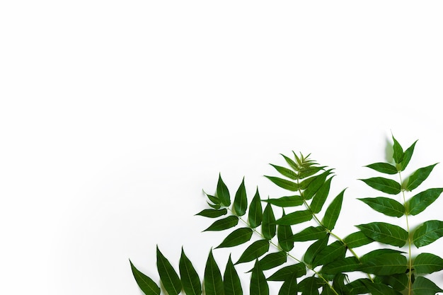 Green leaf branches on white background flat lay top view