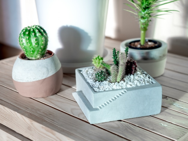 Green leaf, cactus and succulent plants in pots in the room.