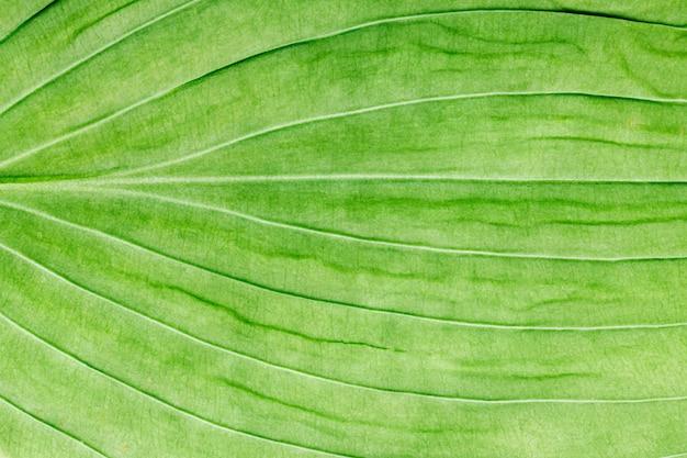 緑の葉をクローズアップ。デザインの背景