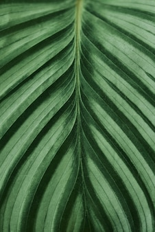 緑の葉は背景をクローズアップ