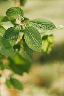 녹색 잎 근접 녹색 봄 식물 봄이왔다