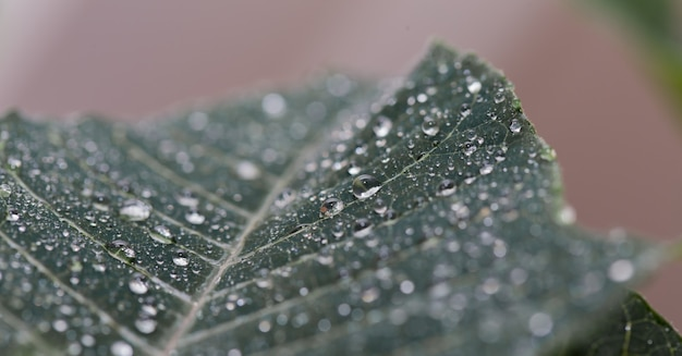 Green leaf close up with water drops
