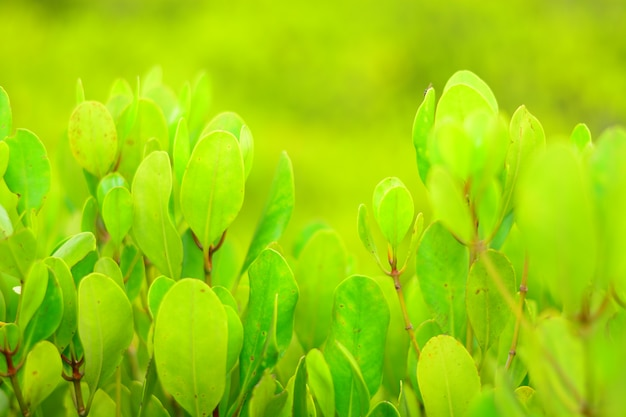 Green leaf closeup with blurred background