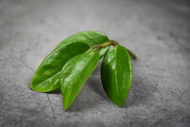 Green leaf on the dark