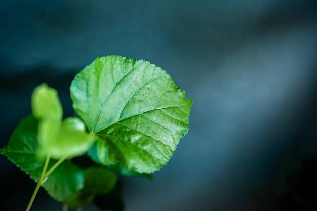 Green leaf in dramatic light.