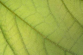 зеленый лист волокна крупным планом для фона
