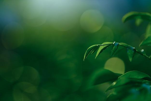 緑のボケ味の背景に緑の葉の鮮度
