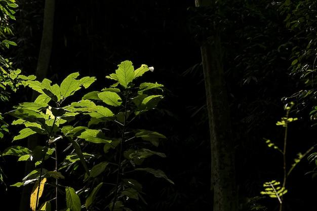 Зеленый лист растет на пути к водопаду, тропический лес, вечнозеленый виноград на черном фоне.