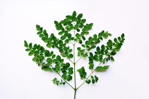 흰색 배경에 고립 된 녹색 잎
