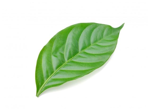 Зеленый лист изолирован