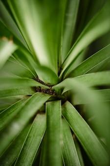 Foglia verde in ripresa macro