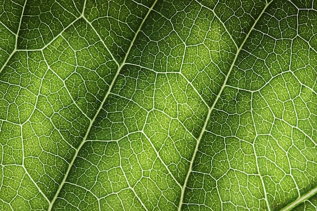 Зеленый лист макрос текстуры фона полный кадр