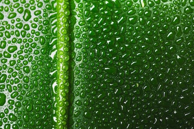 Макрос зеленого листа с каплями воды с копией пространства