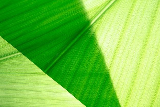 Green leaf, macro, zoom