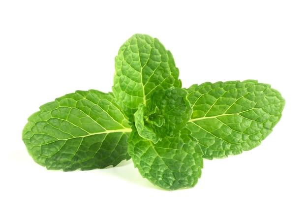 白い背景の上の緑の葉ミント分離