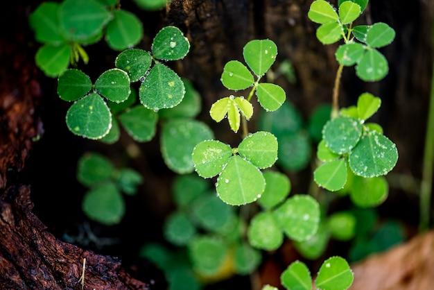 Foglia verde in natura