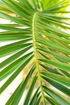 Зеленый лист пальмы крупным планом летний тропический фон