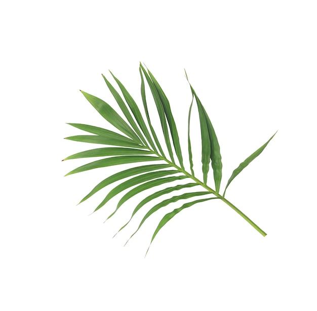 흰색 배경에 고립 된 야자수의 녹색 잎
