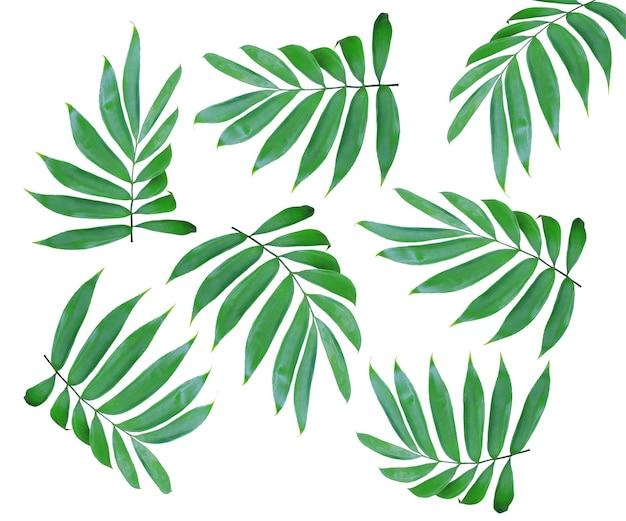 흰색 절연 야자수의 녹색 잎