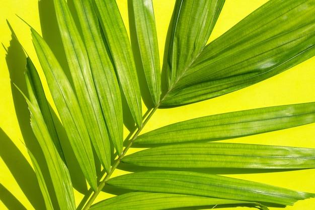 Зеленый лист пальмы на зеленом фоне.