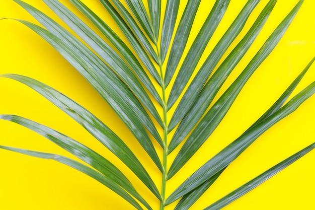 Зеленый лист пальмы на желтом фоне.