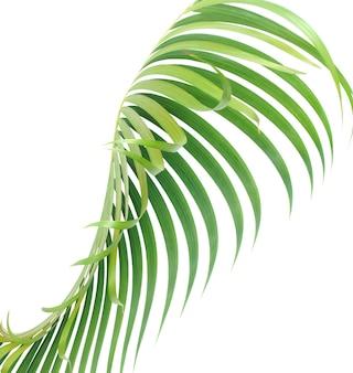 Зеленый лист пальмы