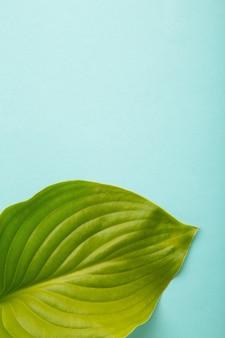 青い背景に緑の葉。縦の写真。上面図