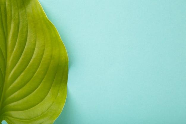 コピースペースと青い背景の上の緑の葉。上面図