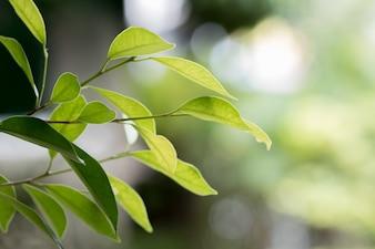 ぼやけた背景に緑の葉