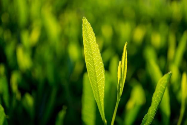 Зеленый лист на размытом в саду