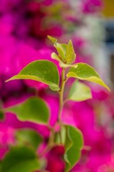 庭でぼやけた緑の葉
