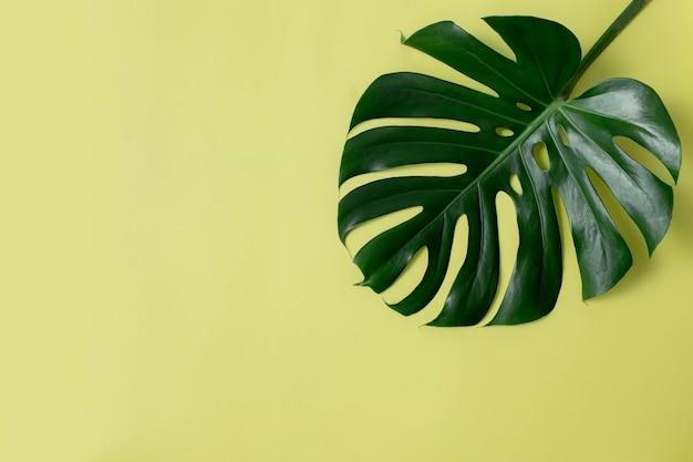 Зеленый лист на светло-зеленом фоне