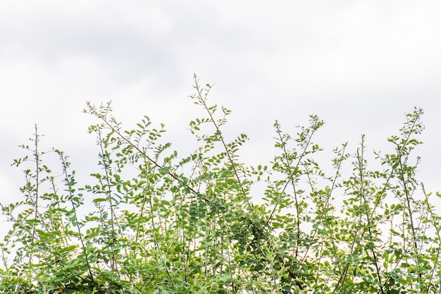 庭の空を背景に緑の葉