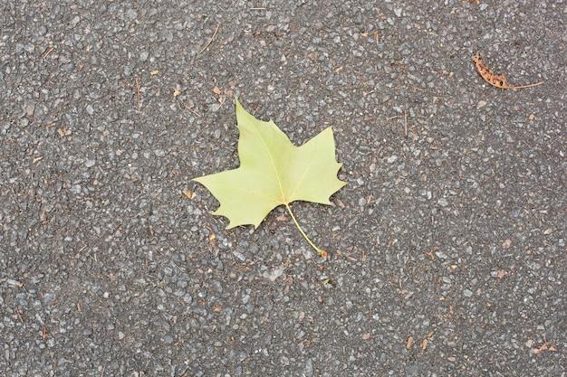 Зеленый лист на асфальте