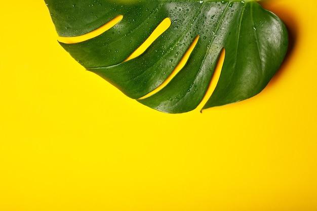 Зеленый лист на желтом фоне крупным планом.
