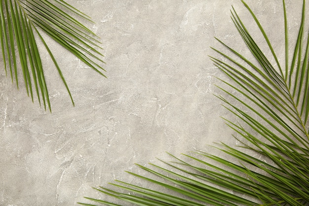 Green leaf of palm tree on grey concrete background, top view