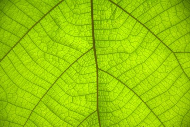 녹색 잎이 패턴 배경