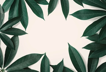 Green leaf pattern border on white background