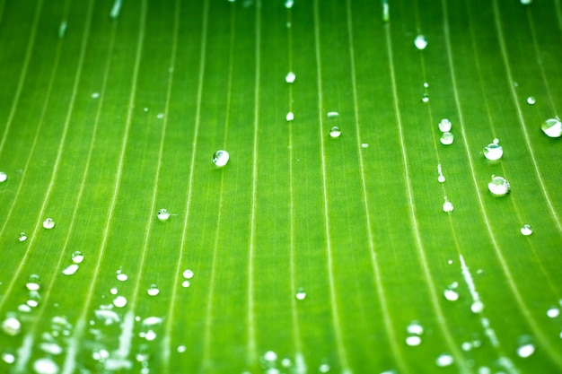 Green leaf pattern and dew with abstract line in nature background.
