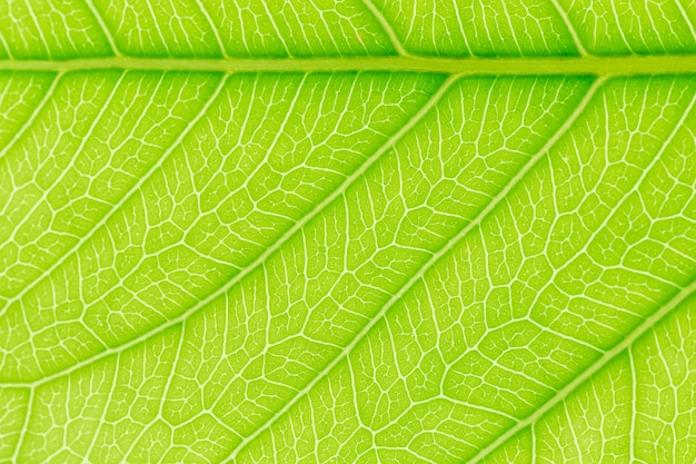 Green leaf pattern texture background with light behind.