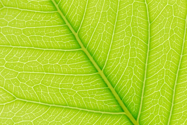 Green leaf pattern texture background